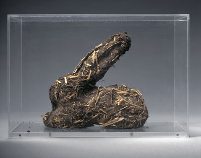 Shit bunny